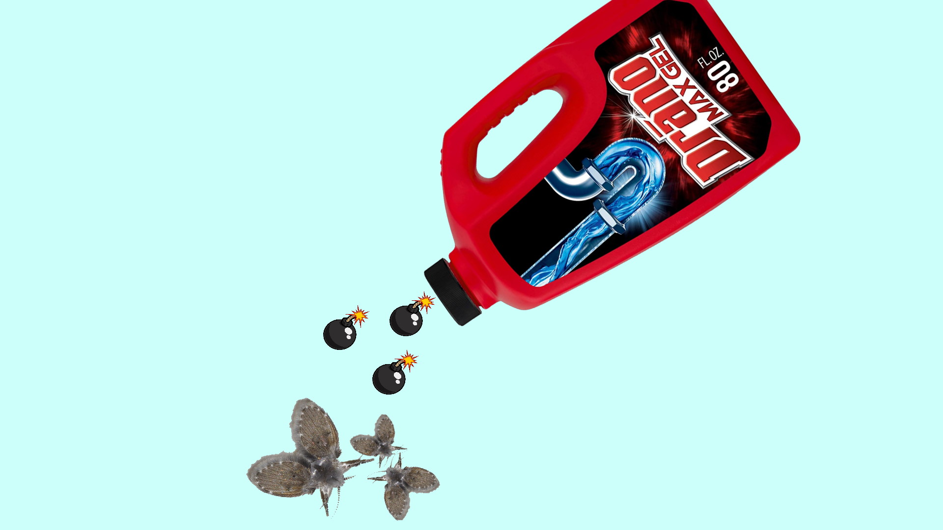 drano for drain flies