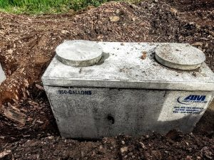 sewer flies in septic tank