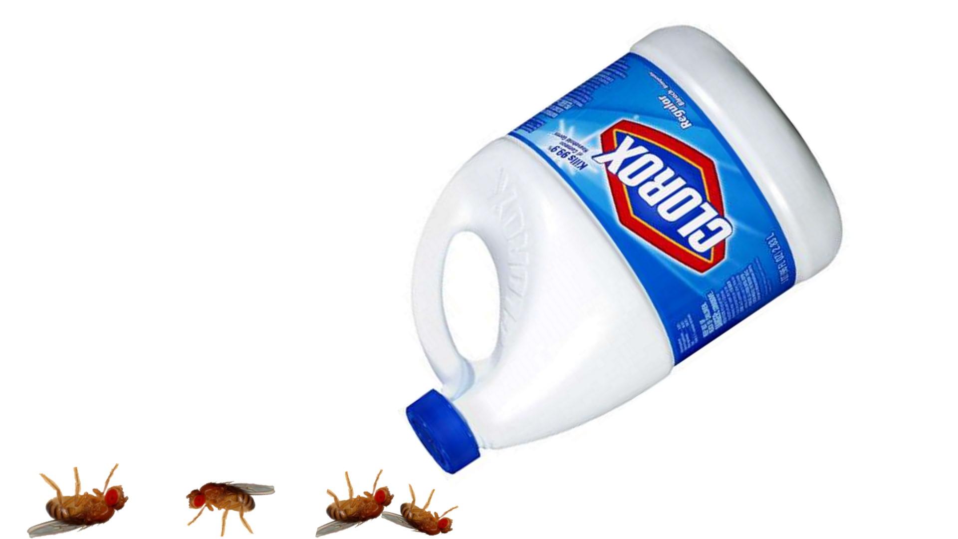 bleach kill fruit flies