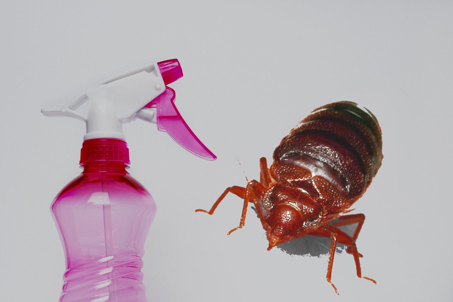 home made bed bug spray